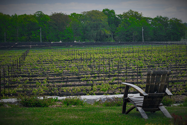 Celebrate the Spring with Niagara Spring Wine Tours